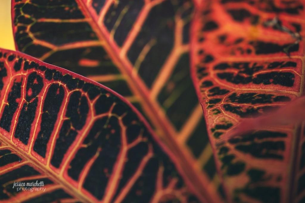 Macro Plant Photography_0007