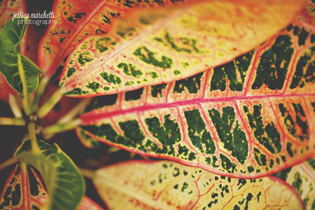 Macro Plant Photography_0010