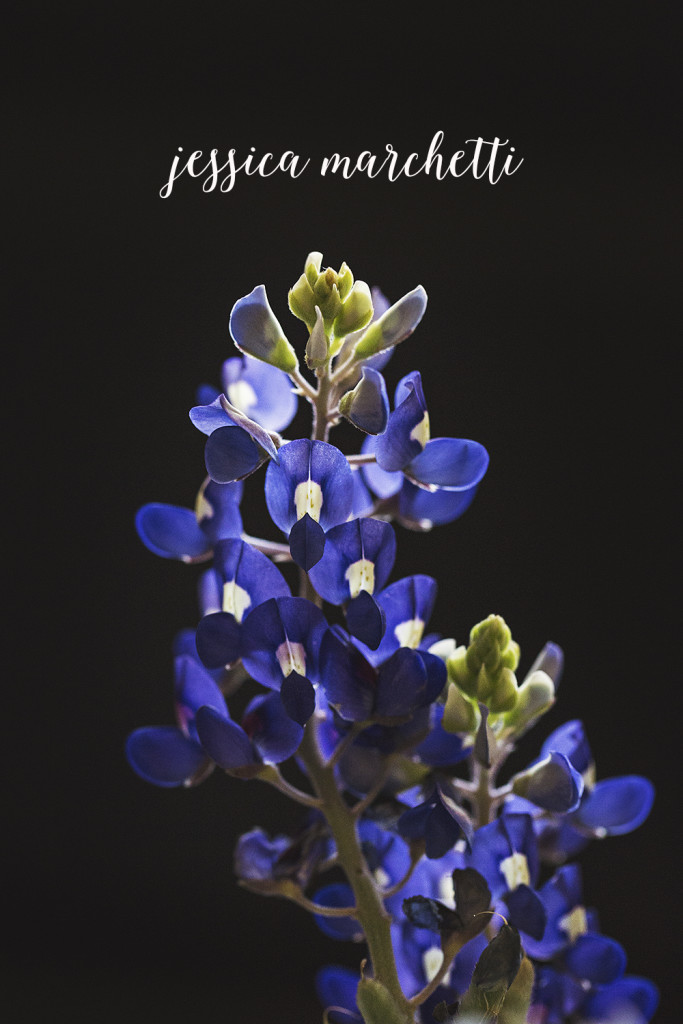 texas bluebonnet wall art