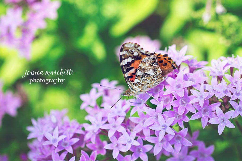 Butterfly-Pentas-1-1024x683.jpg