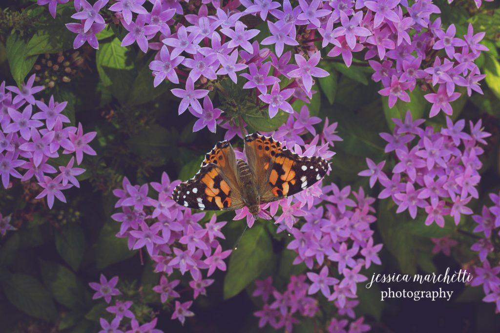 Butterfly-Pentas-14-1024x682.jpg