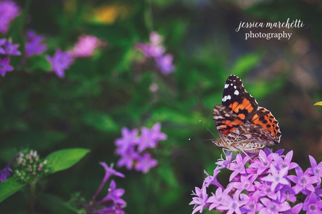 Butterfly-Pentas-7-1024x683.jpg