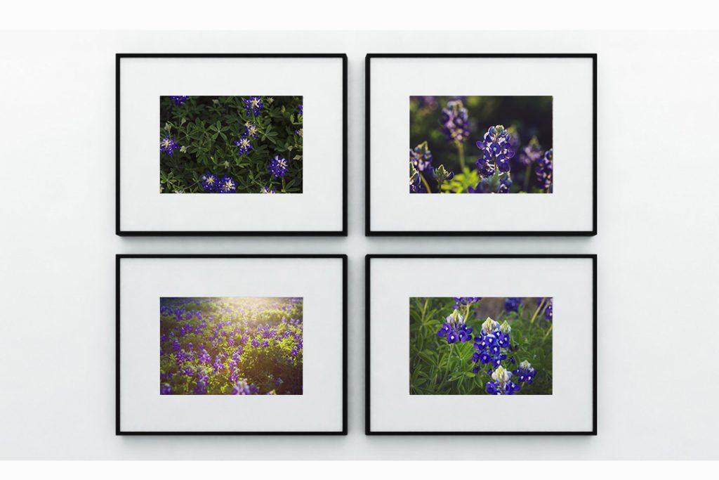Jessica Marchetti Texas Bluebonnet Photography Wall Art