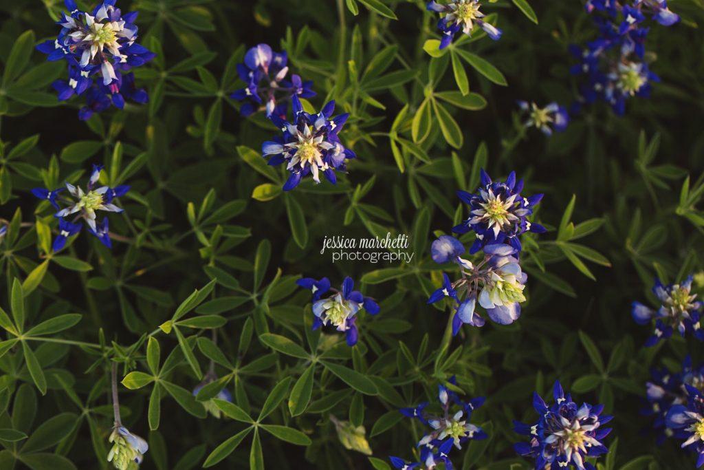 Texas-Bluebonnet-Wall-ARt_0004-1024x683.jpg