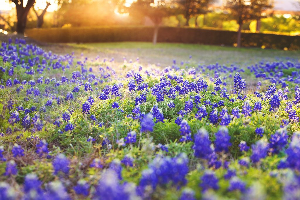 Texas-Bluebonnet-Wall-ARt_0008-1024x683.jpg