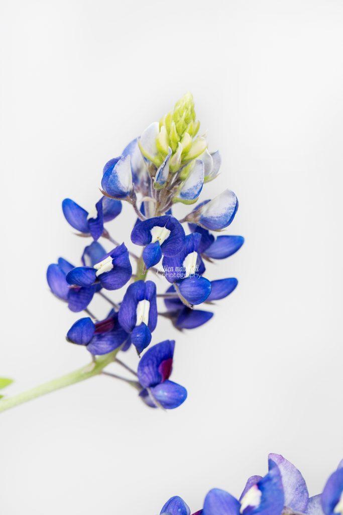 Texas-Bluebonnet-Wall-ARt_0018-683x1024.jpg