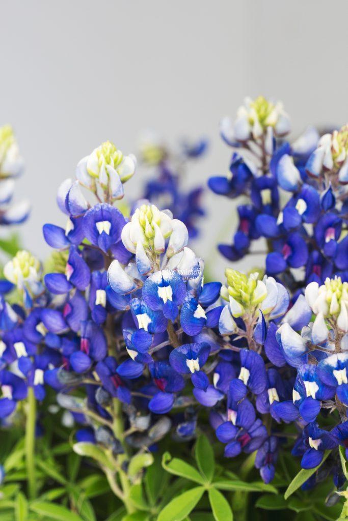 Texas-Bluebonnet-Wall-ARt_0019-683x1024.jpg