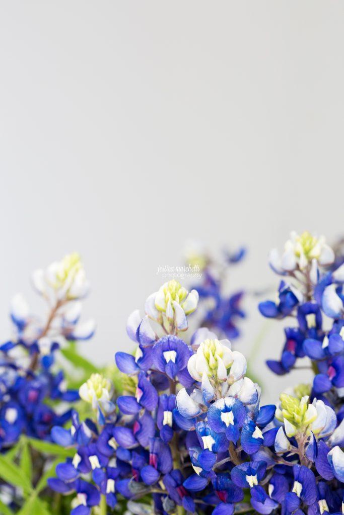 Texas-Bluebonnet-Wall-ARt_0020-683x1024.jpg