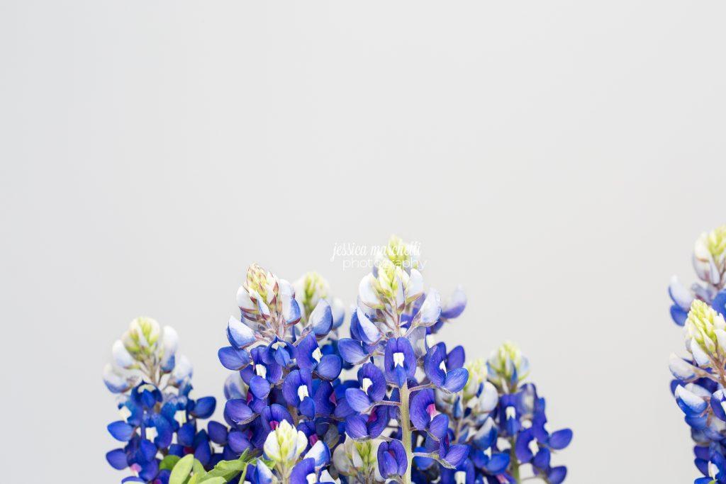 Texas-Bluebonnet-Wall-ARt_0021-1024x683.jpg