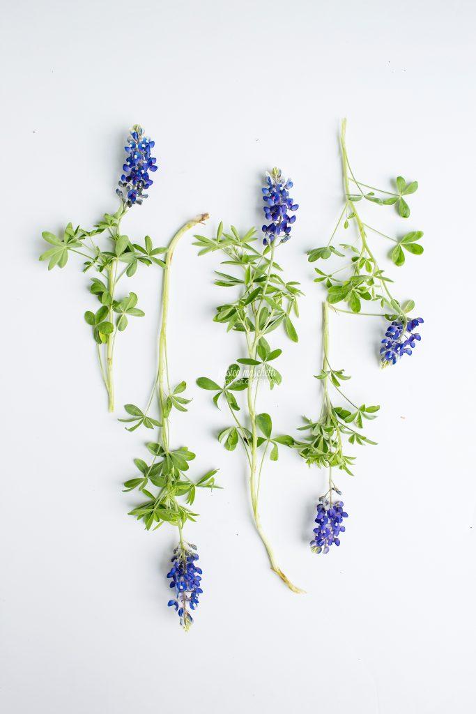 Texas-Bluebonnet-Wall-ARt_0025-683x1024.jpg