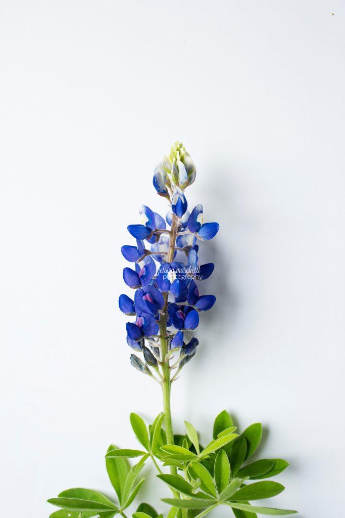 Texas-Bluebonnet-Wall-ARt_0026-683x1024.jpg