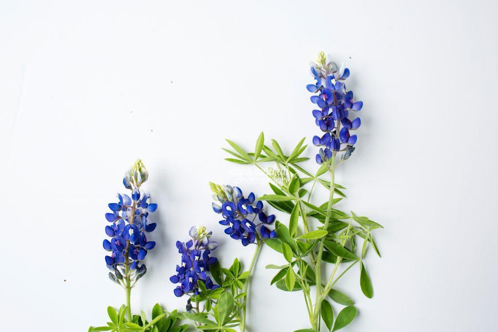 Texas-Bluebonnet-Wall-ARt_0030-1024x683.jpg