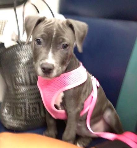 Penelope Puppy
