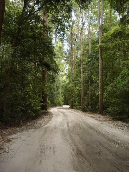 Fraser Island Track