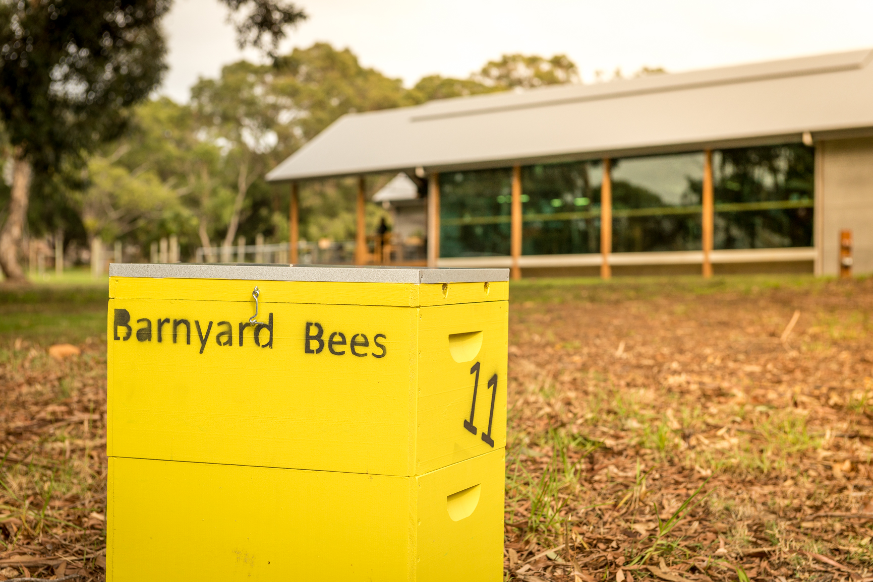 Barnyard bees1.jpg