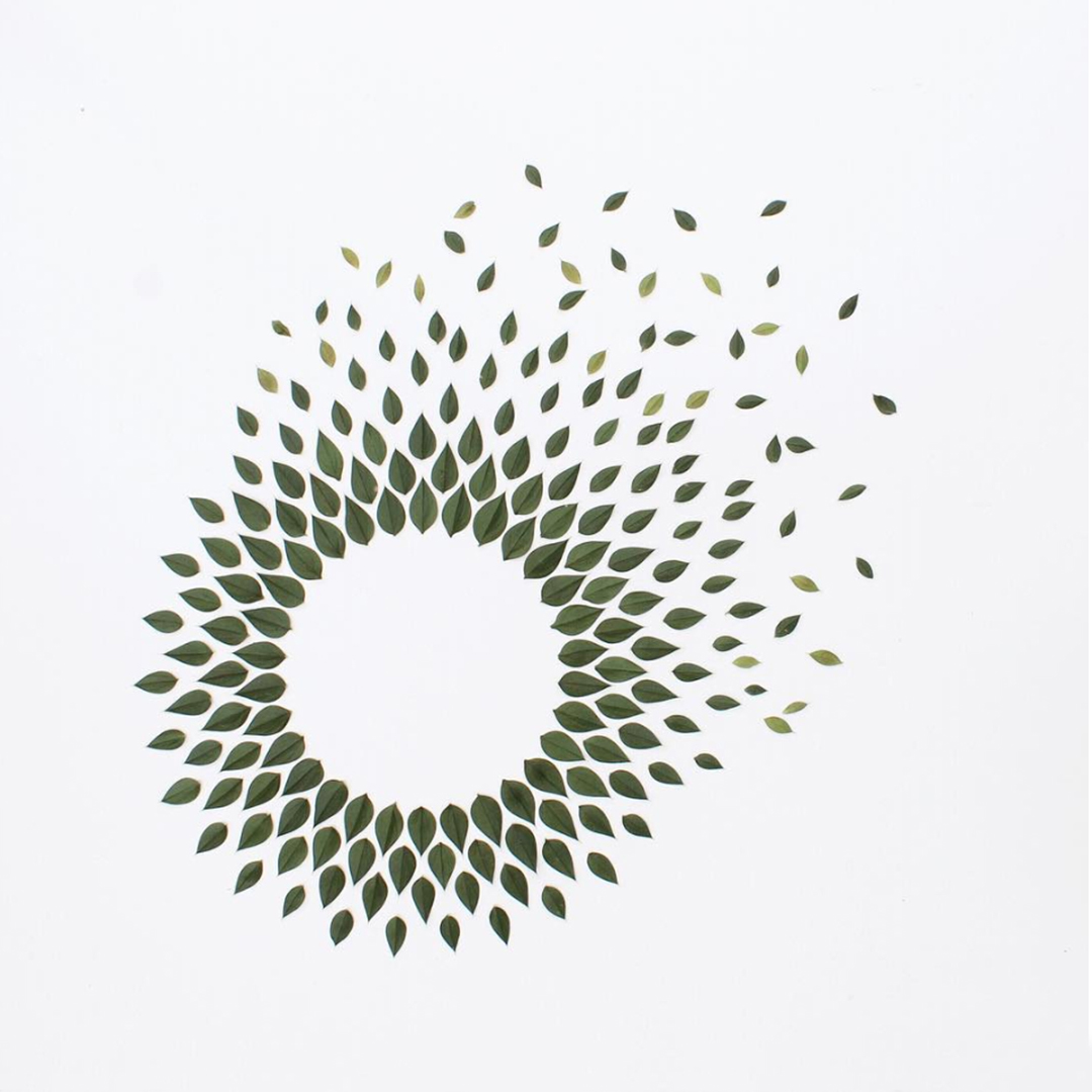 Masters of Instagram Content Creation: Caroline South | Composition of green leaves