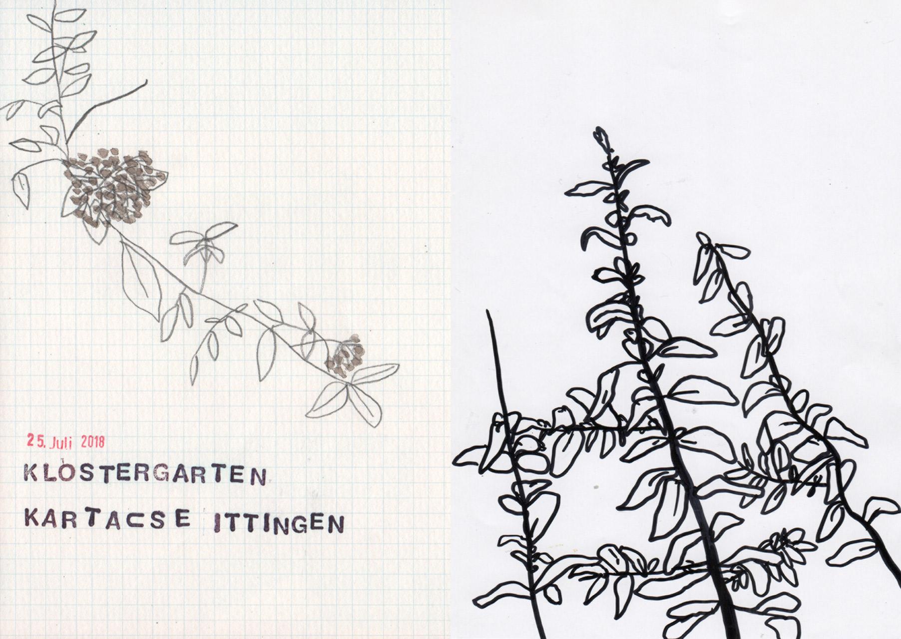 illustration-garten6-deborahlaetsch.jpg
