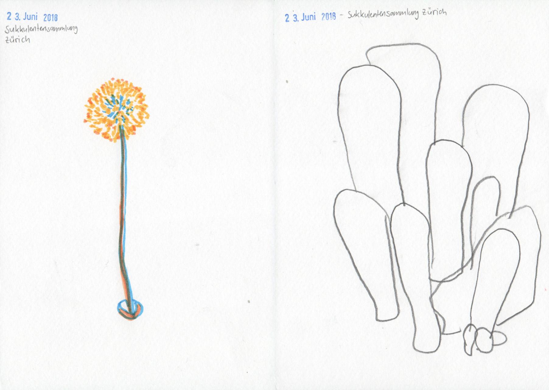 illustration-garten10-deborahlaetsch.jpg