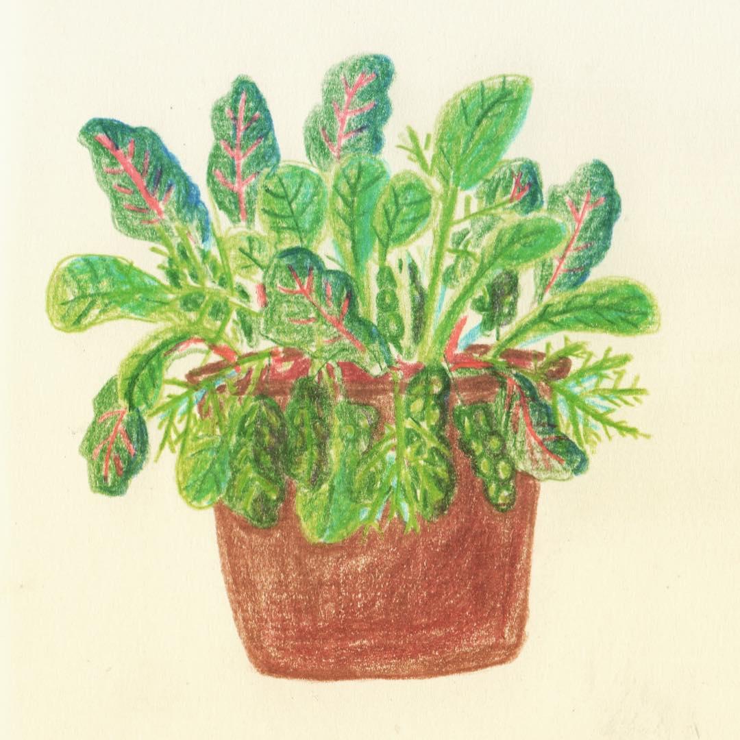 illustration-pflanze-deborahlaetsch.jpg