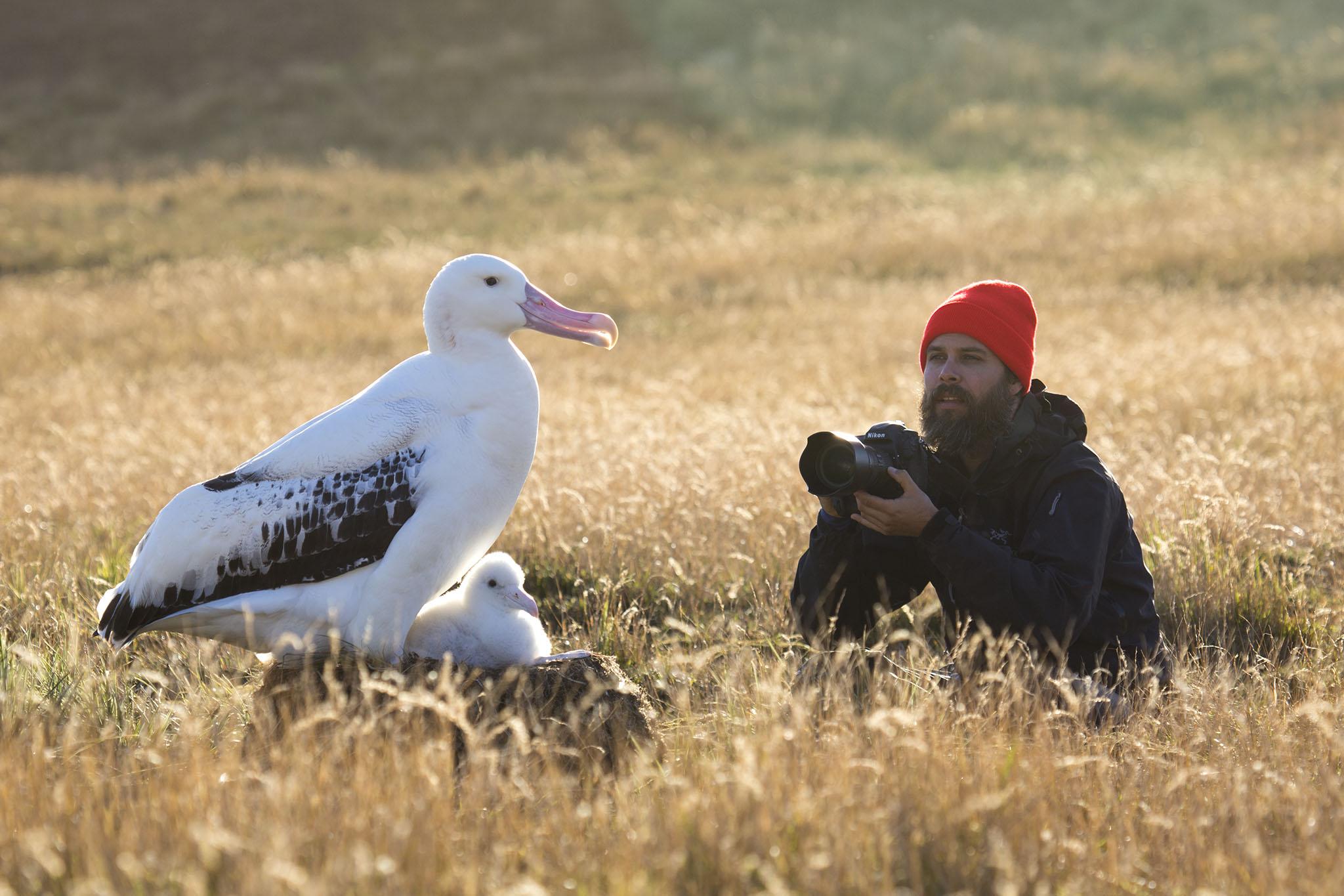 zombie-mouse-marion-island-thomas-peschak-seabirds-otto-whitehead-1.jpg
