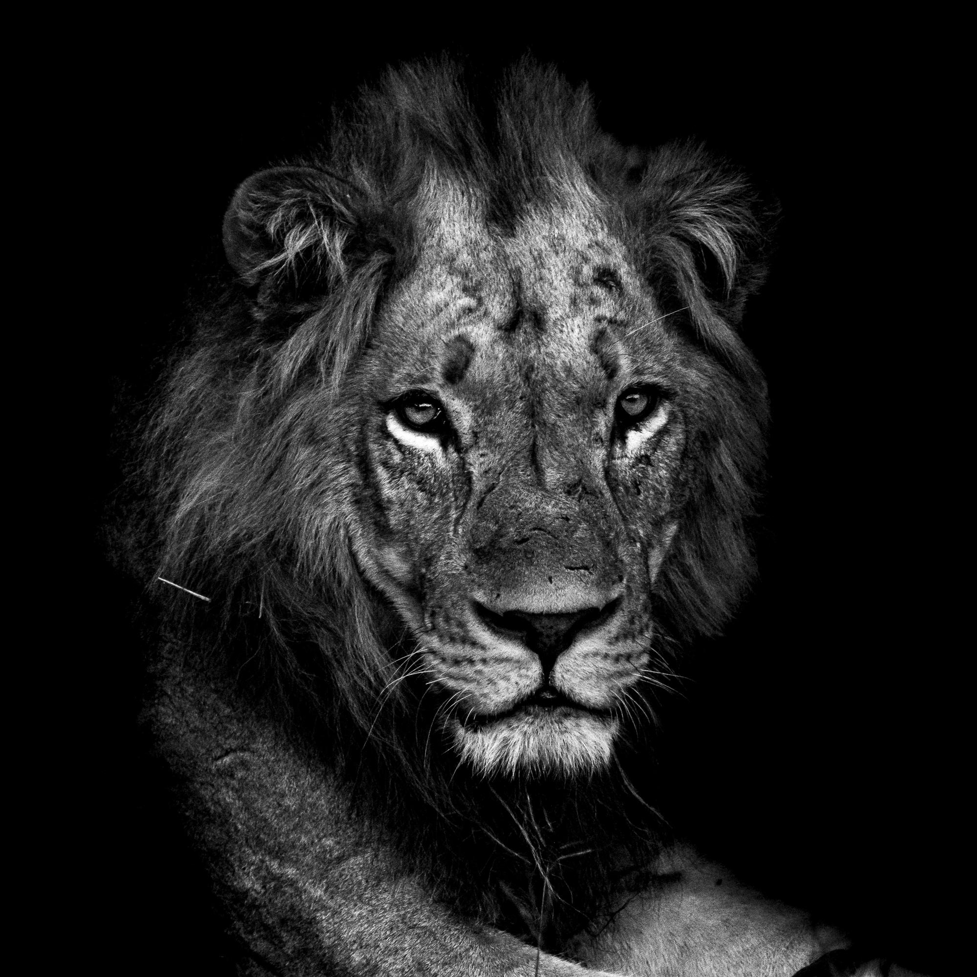 Ankit_Kumar_Lion_Head.jpg