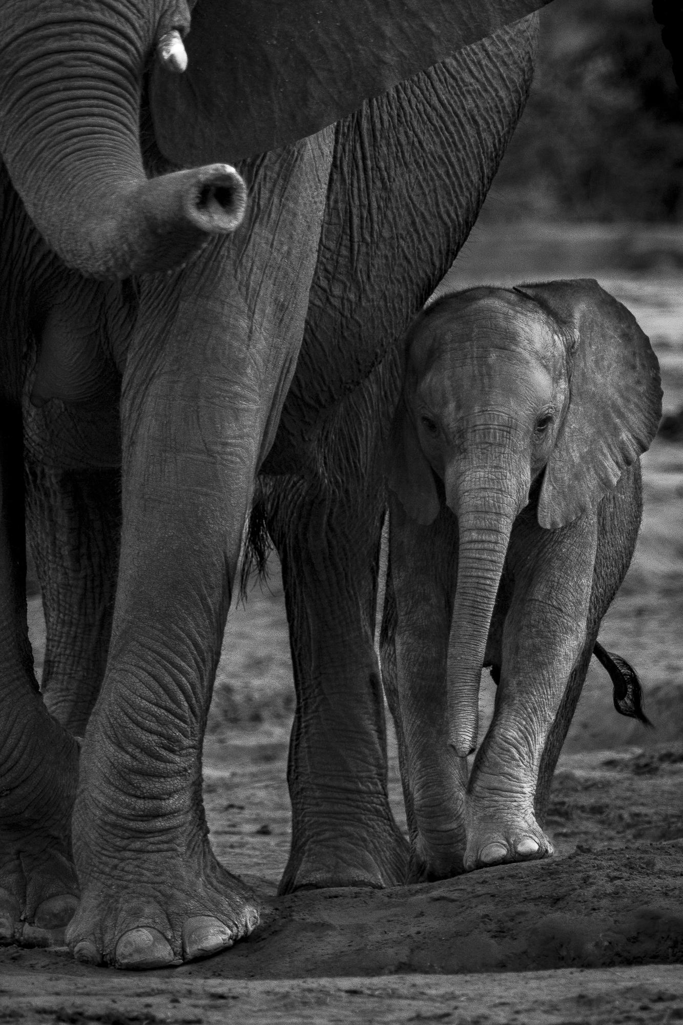 Ankit_Kumar_Mother_and_I.jpg