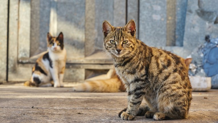 should-feral-cats-be-tamed-4.jpg