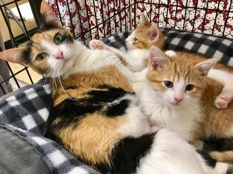 momma and kittens.jpg