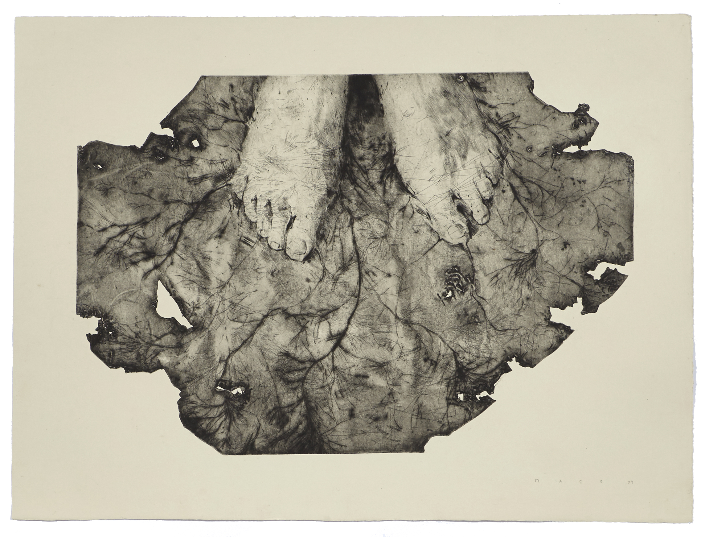 Taking Root    2009 | 54 x 73 cm | Dry point