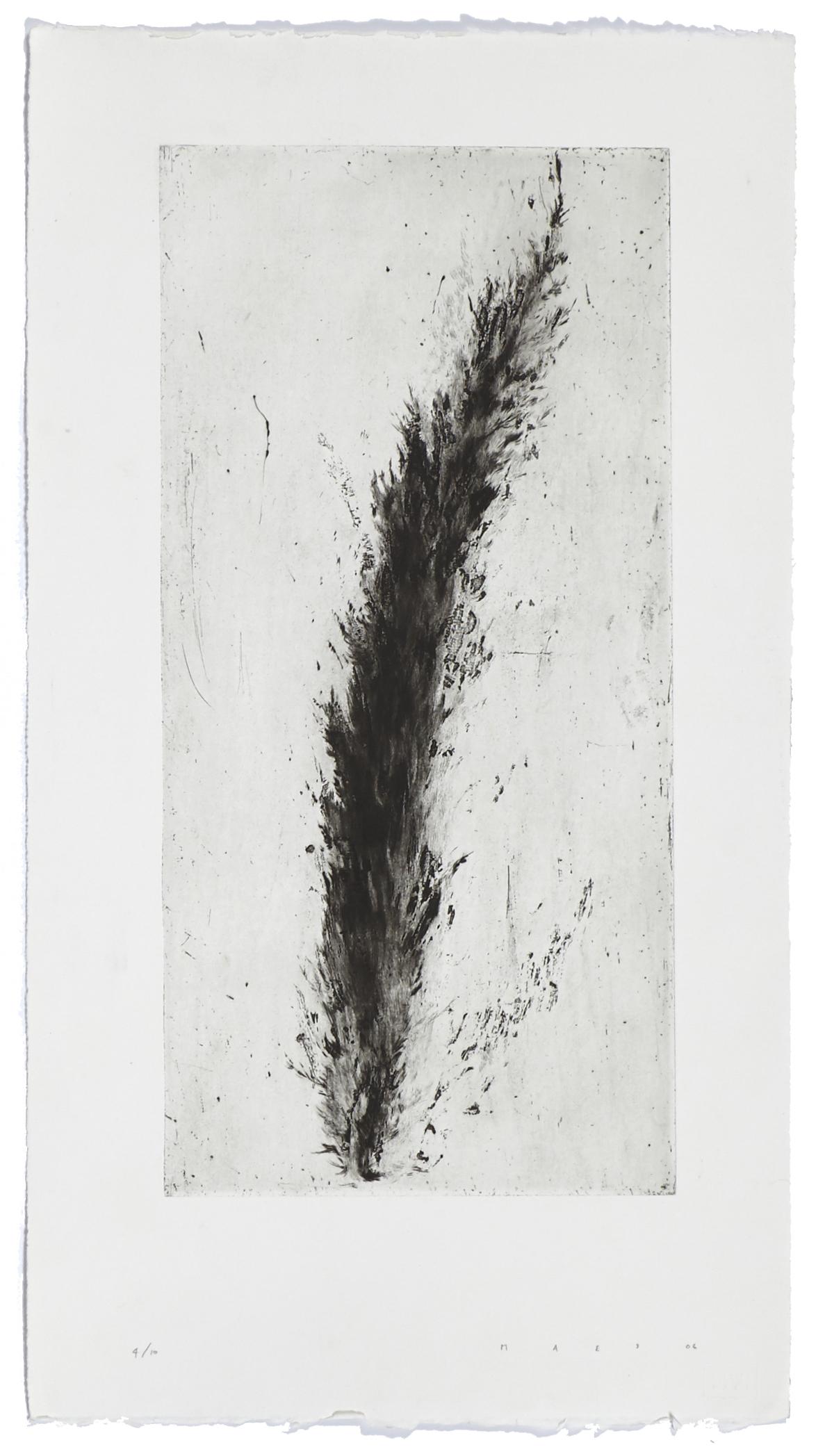 Cyprès    2006 | 66.5 x 37 cm | Dry point | 10 prints