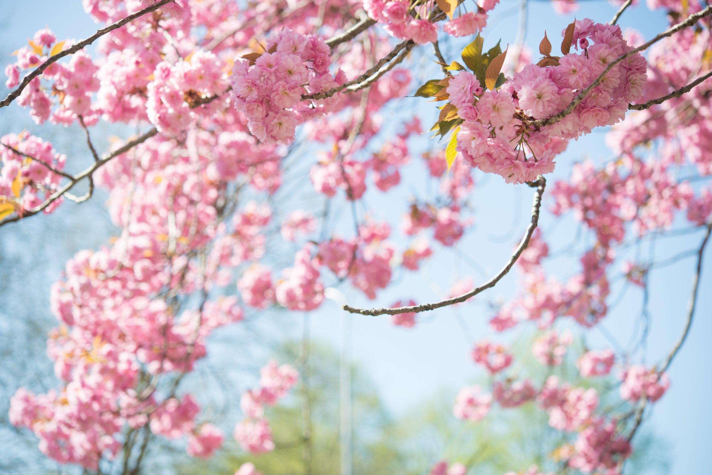 beautiful-bloom-blooming-1038508.jpg