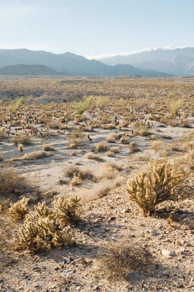 Desert-Details-0199-683x1024.jpg