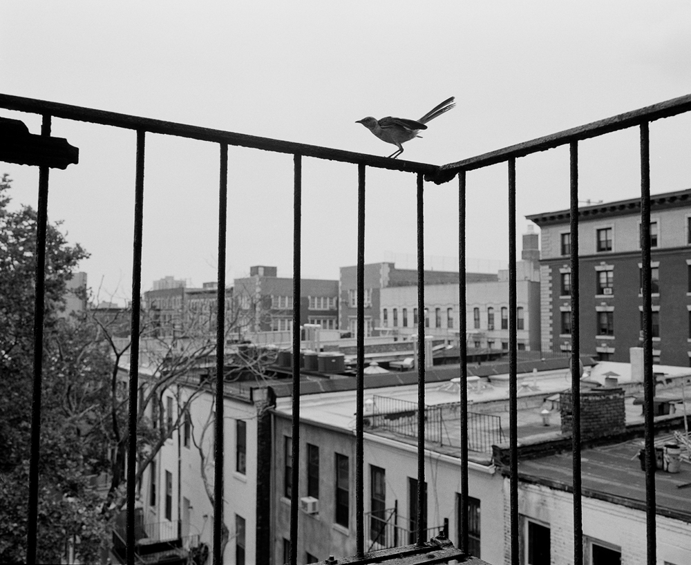 Harlem, New York 2007