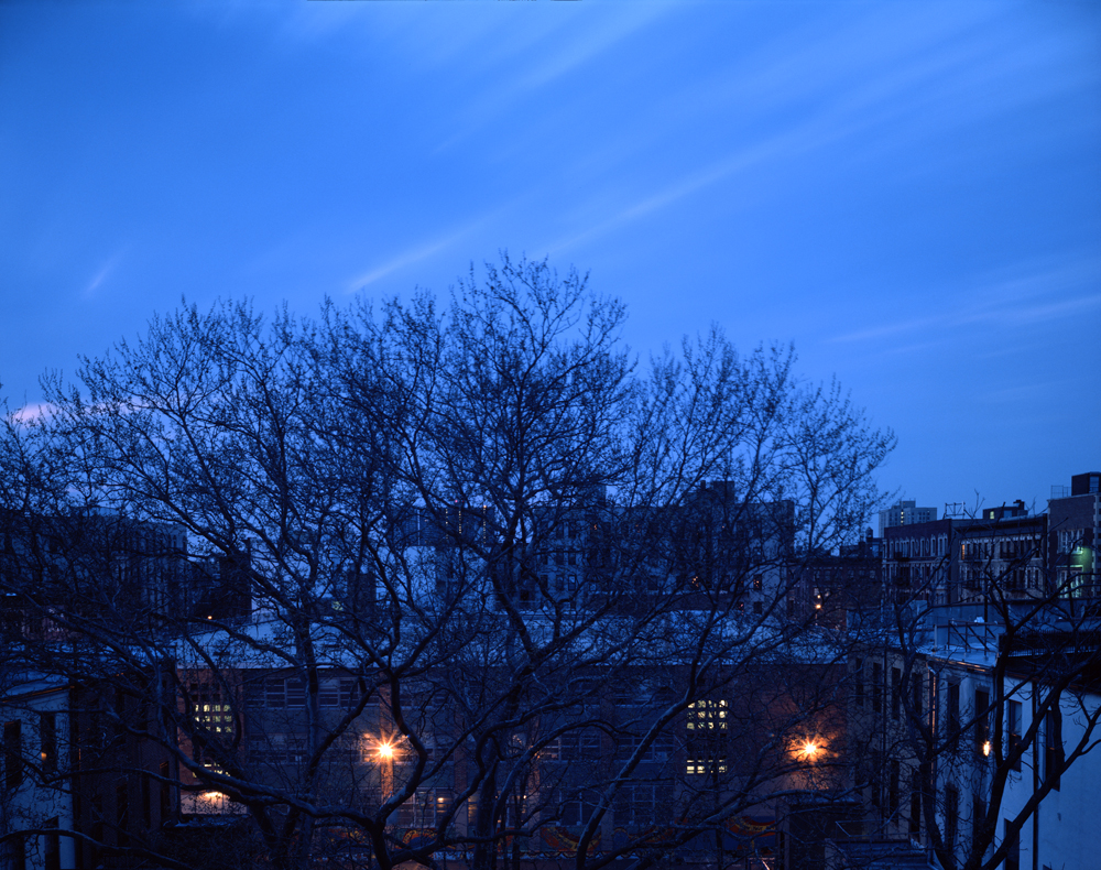 A Tree grows in Harlem #9 2006