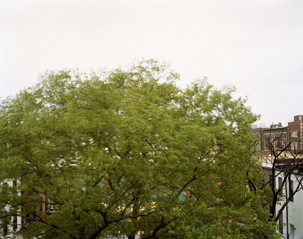 A Tree grows in Harlem #22 2007