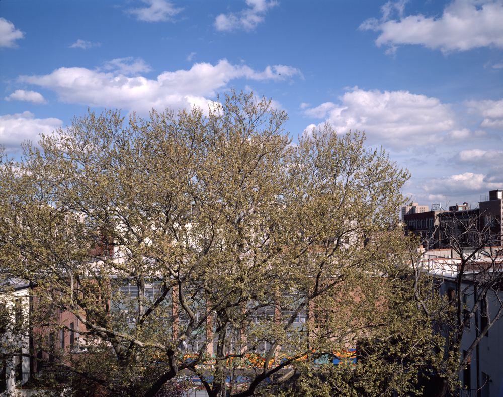 A Tree grows in Harlem #41 2008