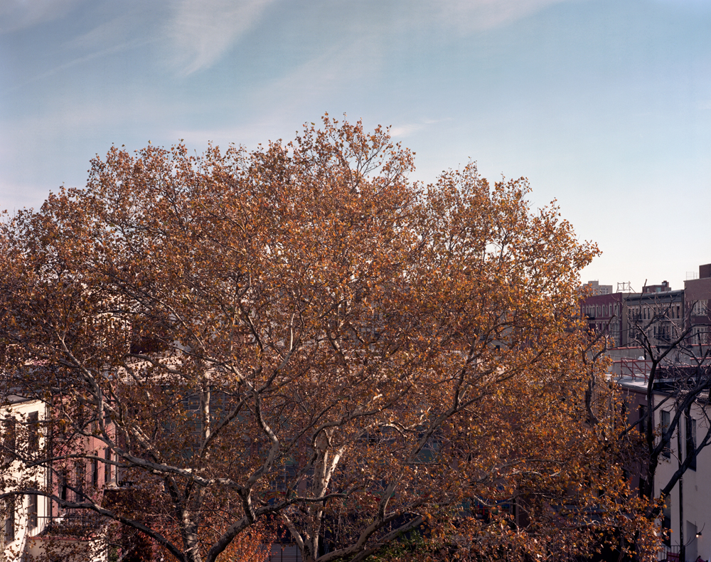 A Tree grows in Harlem #29 2007