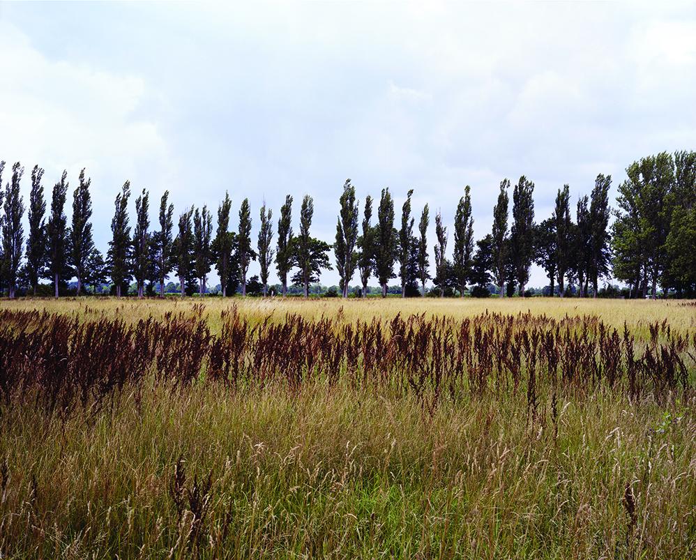 Neungamme Field