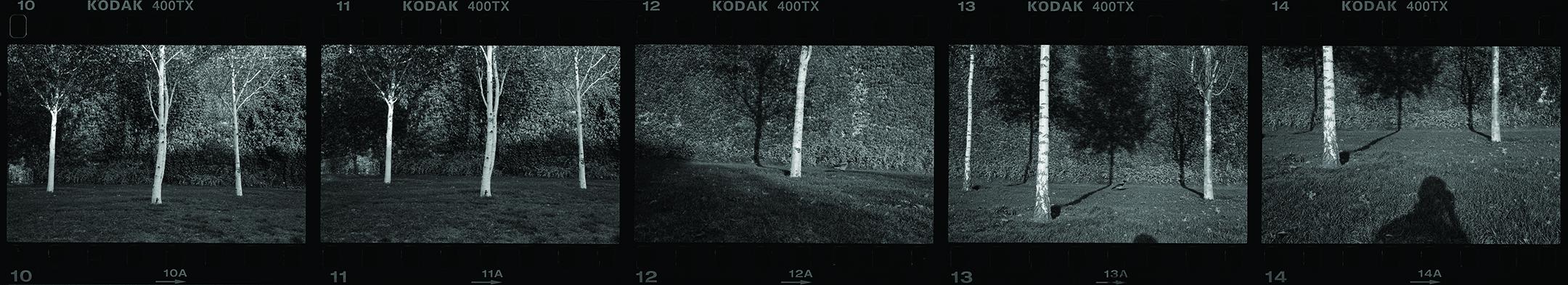 Tiergarten, 2008
