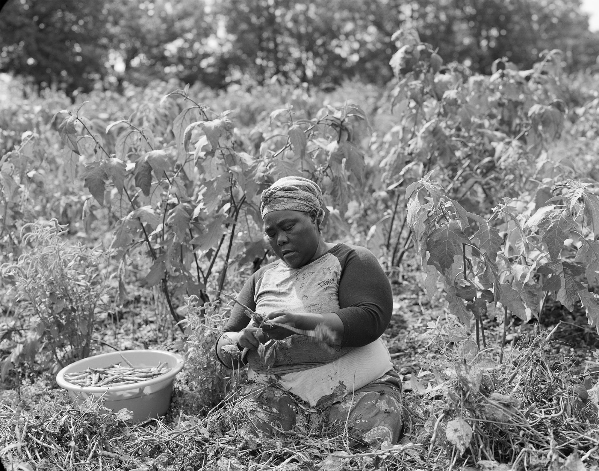 Safira (Burundi) 2018