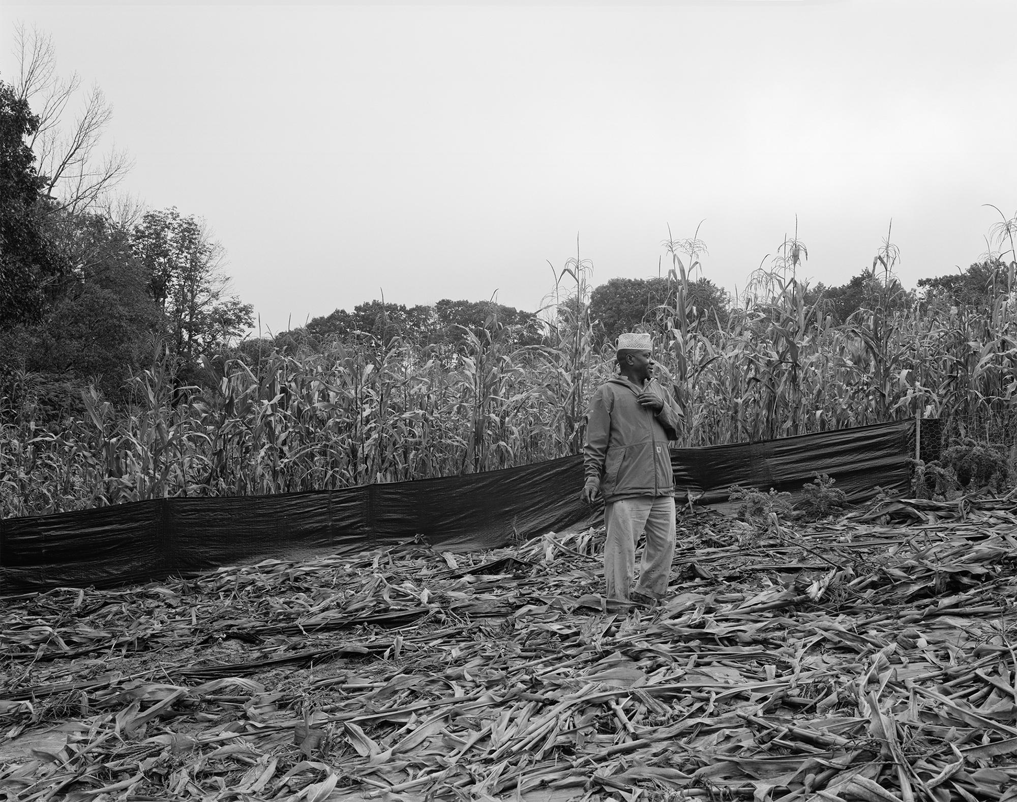 Sidi in his corn field 2018