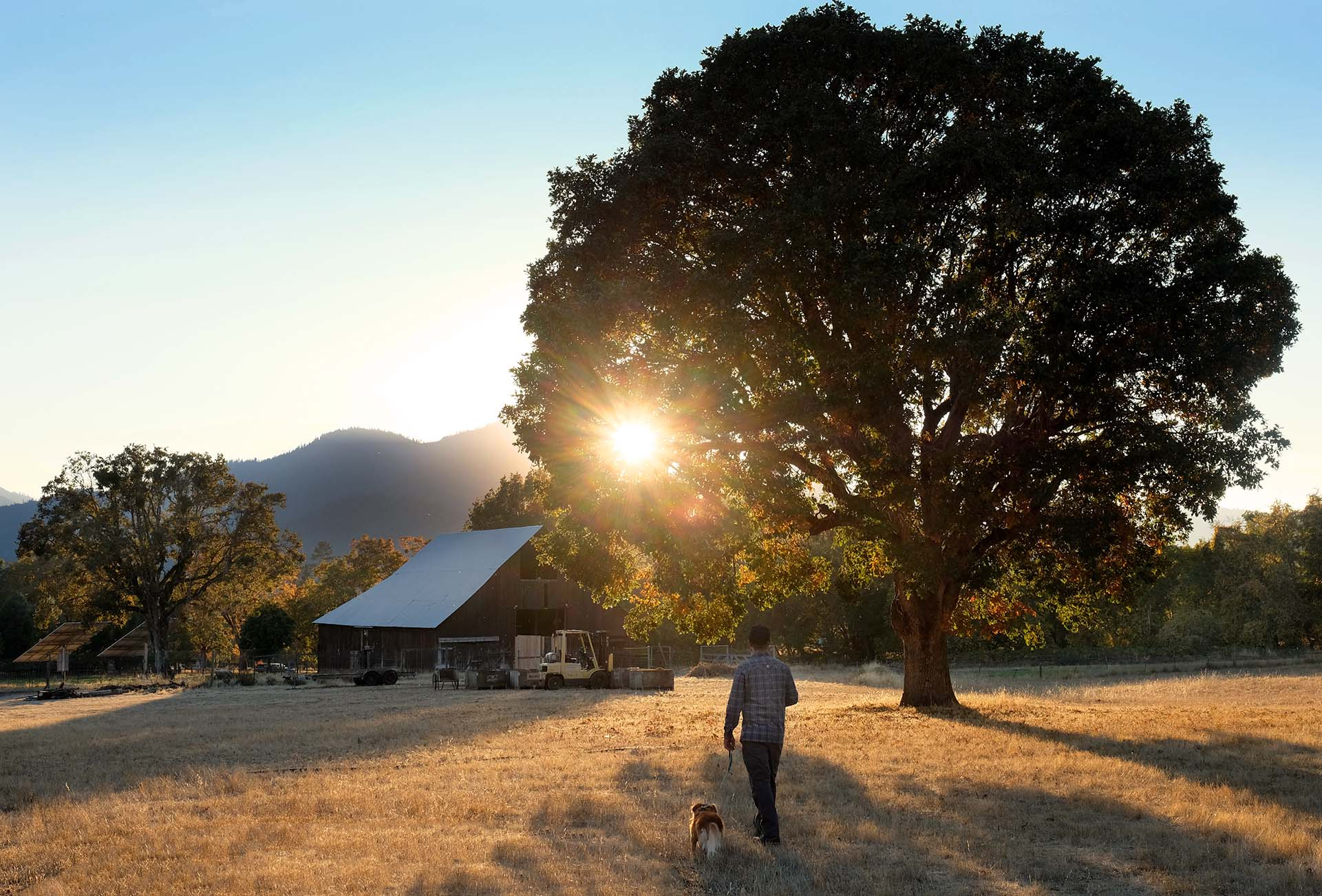 Jeremy and his dog walk towards the barn while the sun sets behind and oak tree.