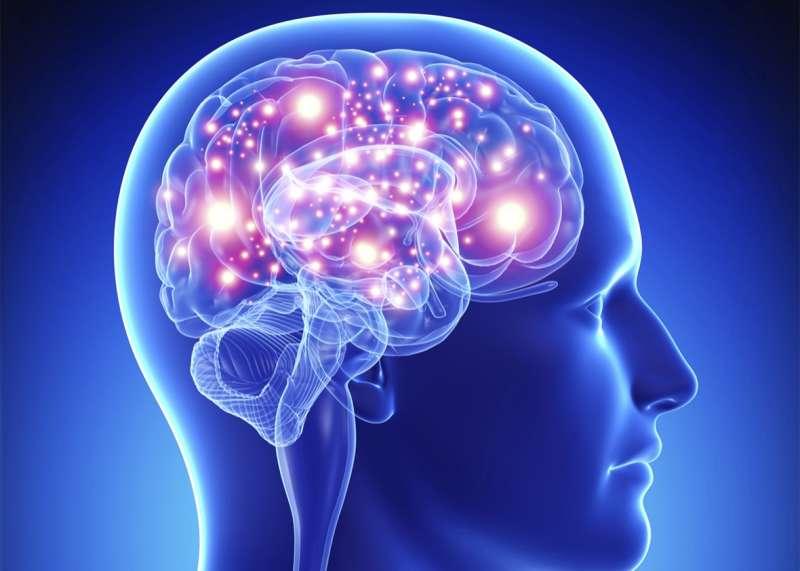 highlight brain.jpg