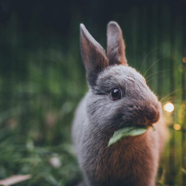Happy long weekend little bunnies! So far I've eaten a hot cross bun or two, had 3 cups of tea, had a shower just before 12 and started watching Turn Up Charlie on Netflix. I am the queen of relaxation! Back in the clinic tomorrow and then another two days off!  #longweekend #easterbunny #hotcrossbuns #relaxation #nutritionist #restandrelax #wellbeing #mindfulness #happy