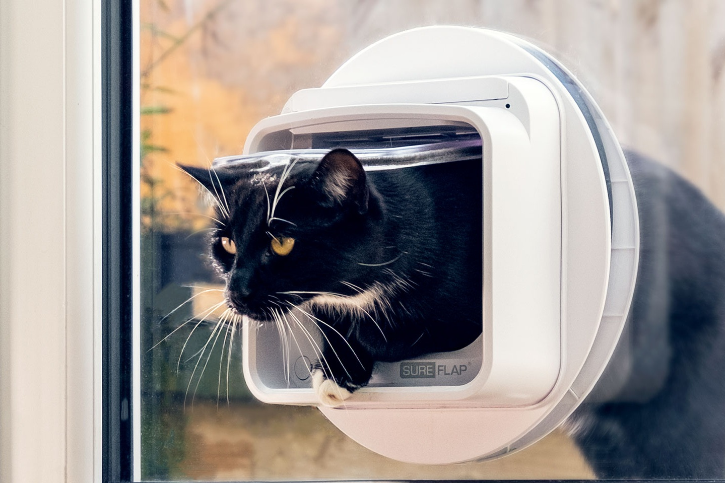 Microchip-cat-flap-connect.jpg