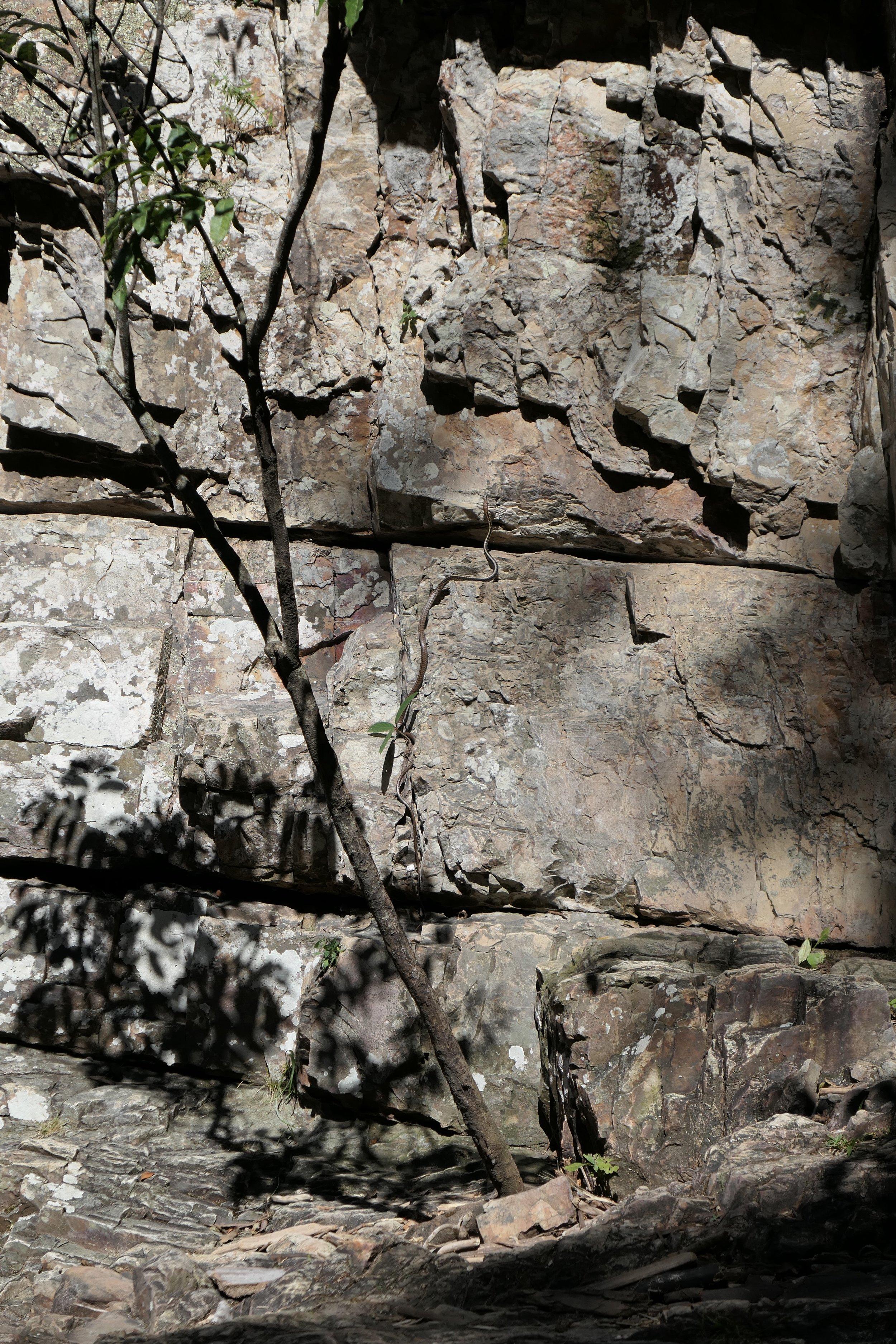 climbing snake 1.jpg