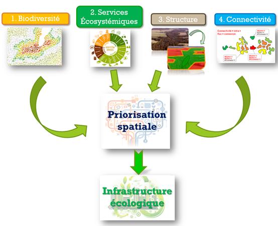 Figure 1 – Les quatre piliers du concept d'infrastructure écologique proposé