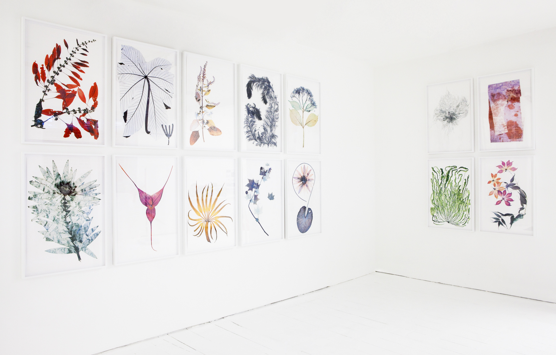 "Nick Knight, ""Flora"" series at SHOWstudio Shop, 2012"