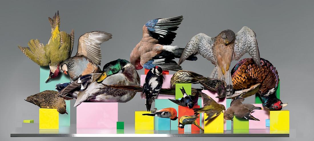birds-1.1100x0.jpg