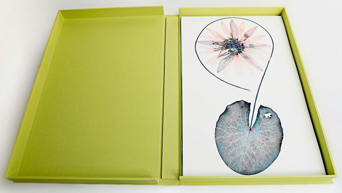 flora_portfolio.1100x0.jpg